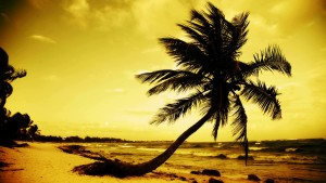 paradise_palms4-8262013